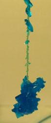 кристалл медногокупороса (через трое суток после начала опыта)