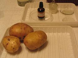 картофель и иодная настойка - все готово к испытаниям